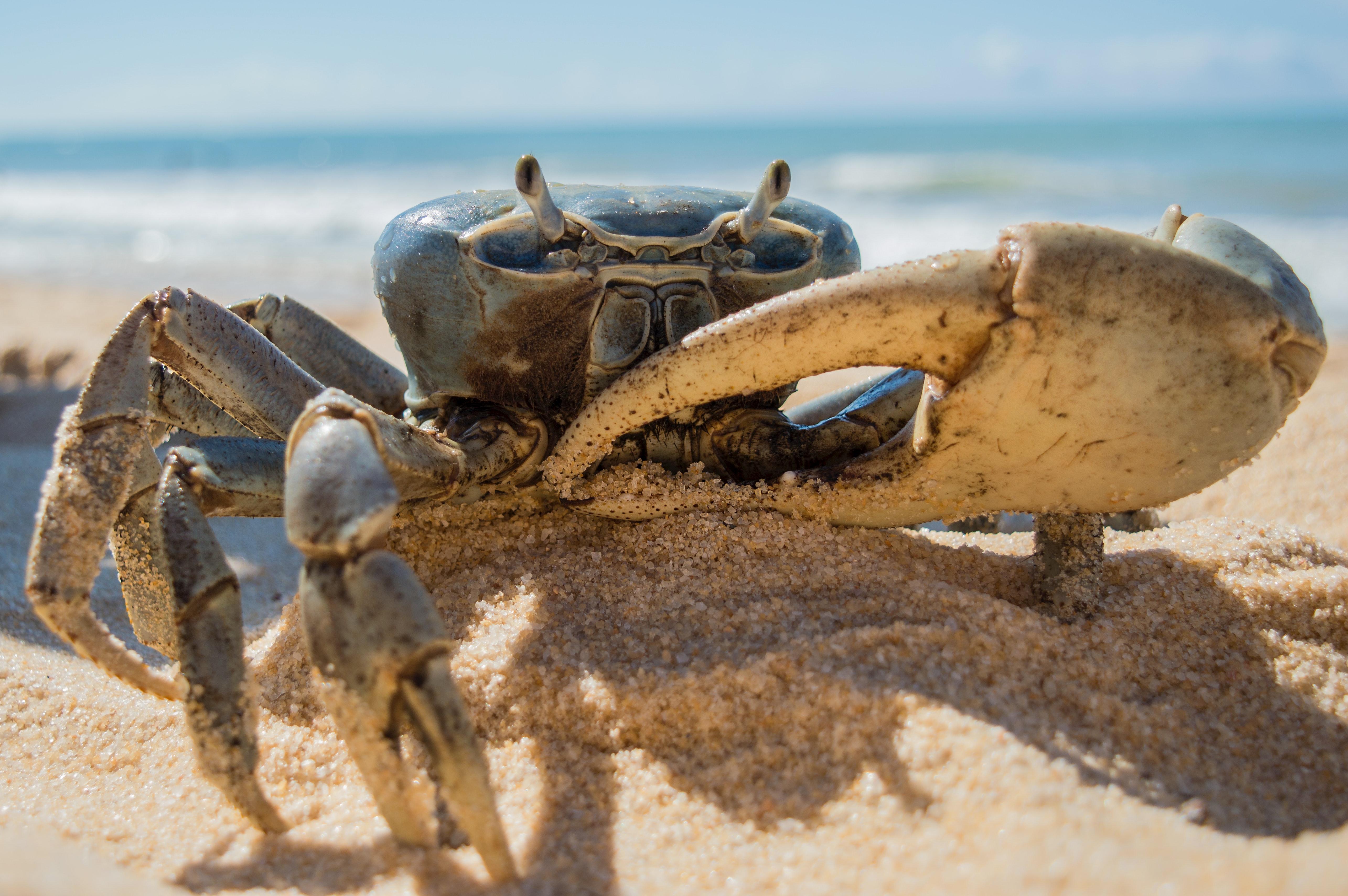 beach-claw-claws-306908.jpg
